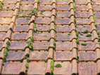 A picture of a tiled roof that needs a roof moss treatment solution