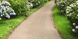 A picture of clean pathway
