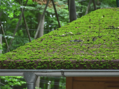 A stock photo of a moss-covered rooftop with trees in the background.